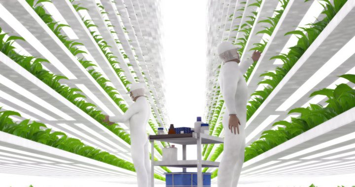 2017 Food Innovations: What Is the Future of Food?