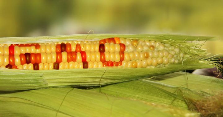 Genetically Engineered Foods: Do You Know What You Eat?