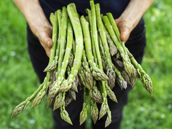 Does Cooking Asparagus Seem Difficult? We Have Some Ideas for Beginners