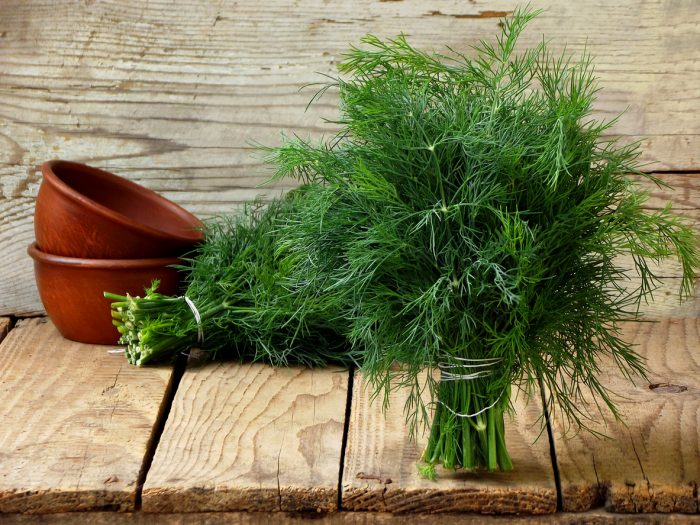 Choosing Herbs 101: Tips and Tricks