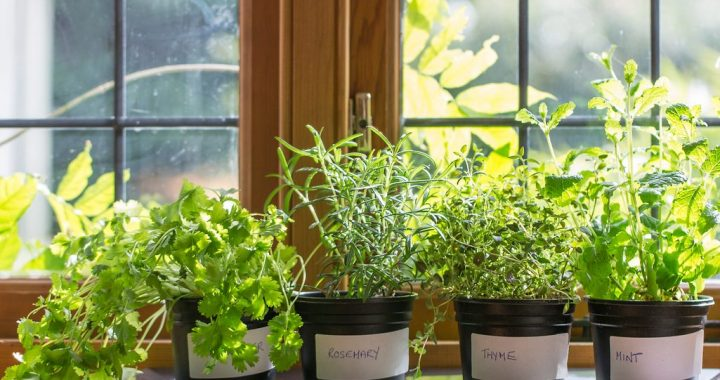 Choosing Herbs 101: Tips and Tricks