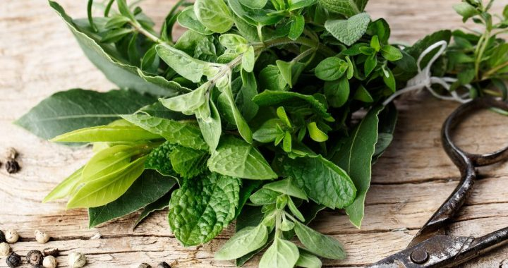 The Guide to Fresh Herbs: Choose, Store and Freeze
