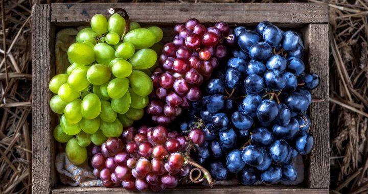 A Nutritious Harvest: Grape Health Benefits on the Vine