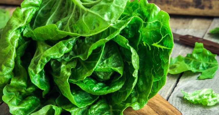 Why Lettuce Should Be Eradicated From The Face Of The Earth