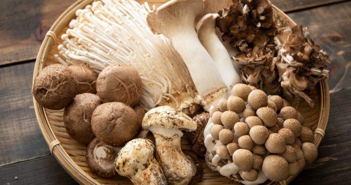 Keeping Mushroom Fresh: What's the Best Way?