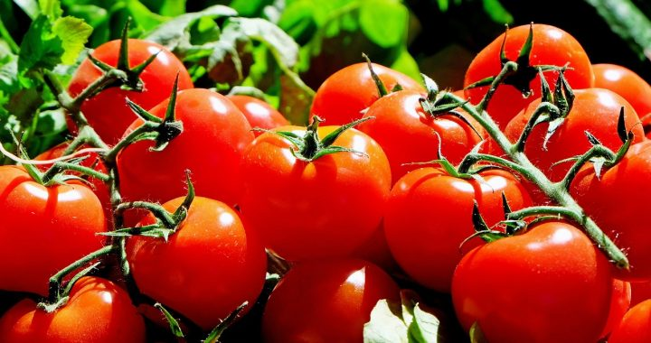 Eating Tomatoes Might Increase Male Fertility -