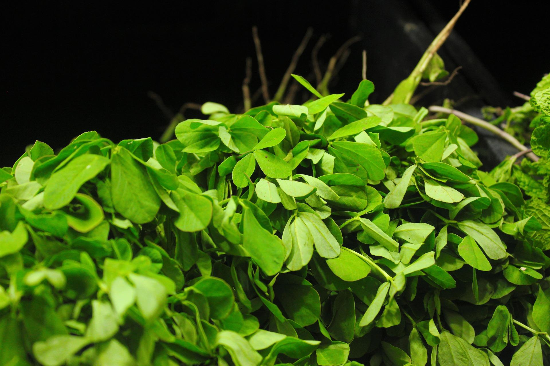 fenugreek-spice-or-medicine
