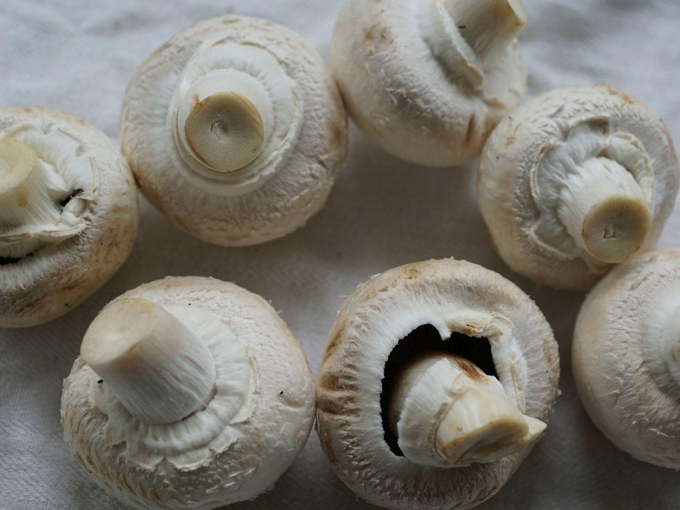 QUIZ: Know Your Mushrooms -